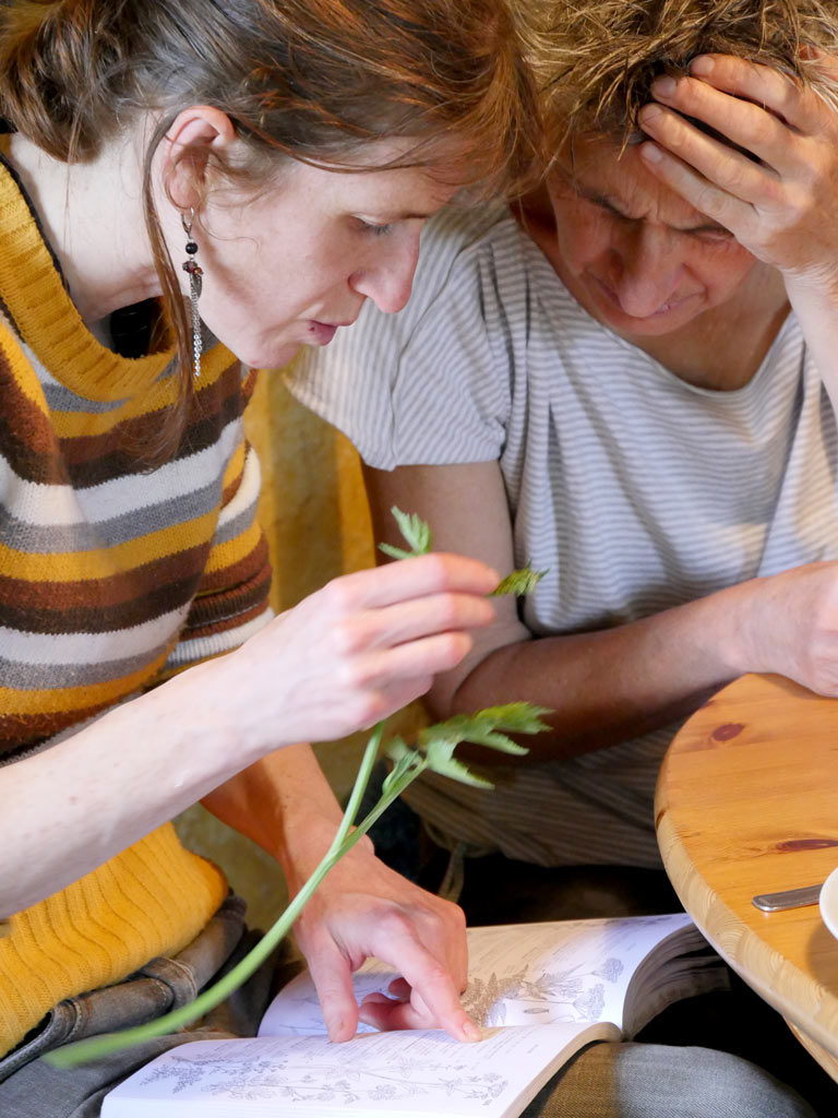 Identification des plantes